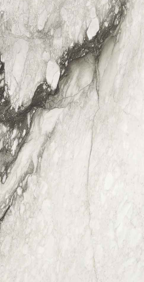 etoile de rex renoir