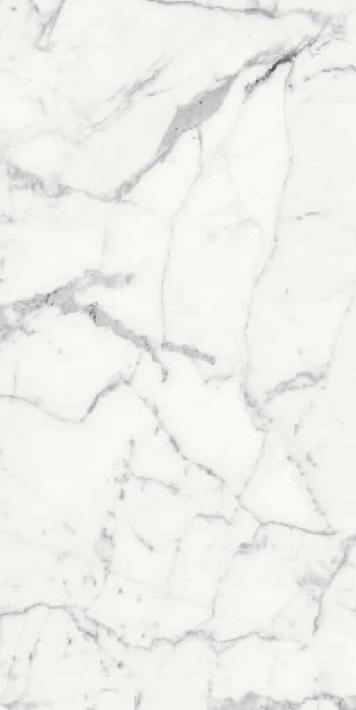 LES ORIGINES de REX blanc 769860